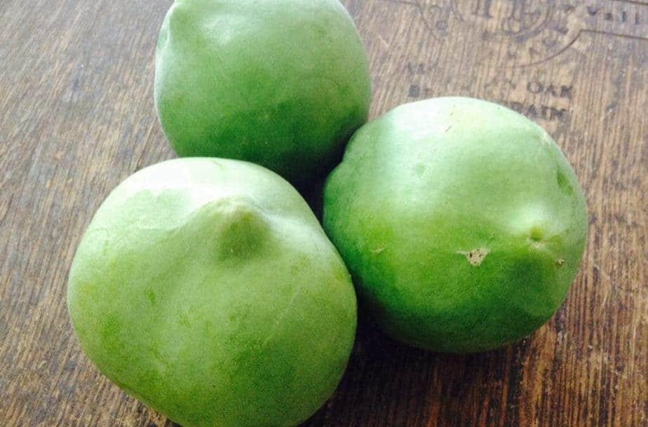 Aztec Fruit