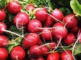 TGB radish