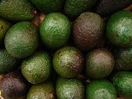 TGB avocado