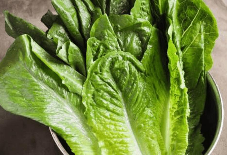TGB Lettuce