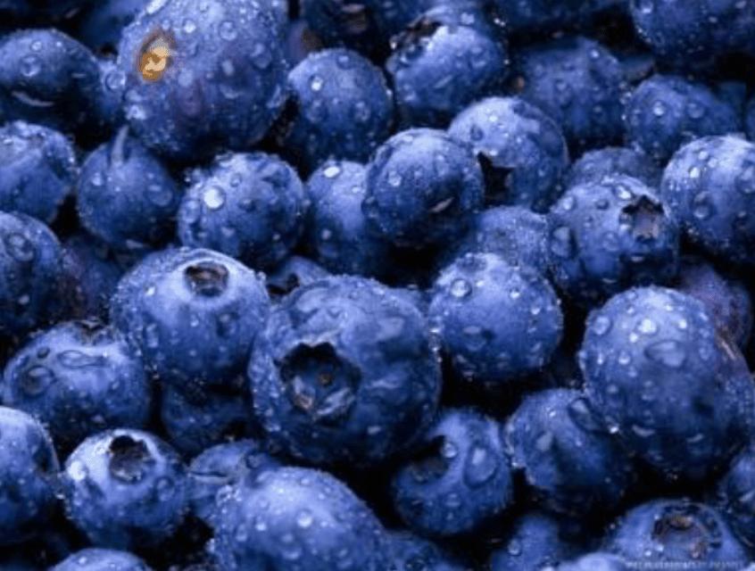 TGB blueberries