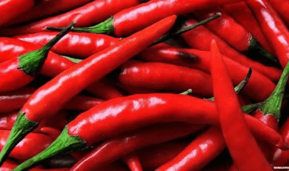 TGB chillies red