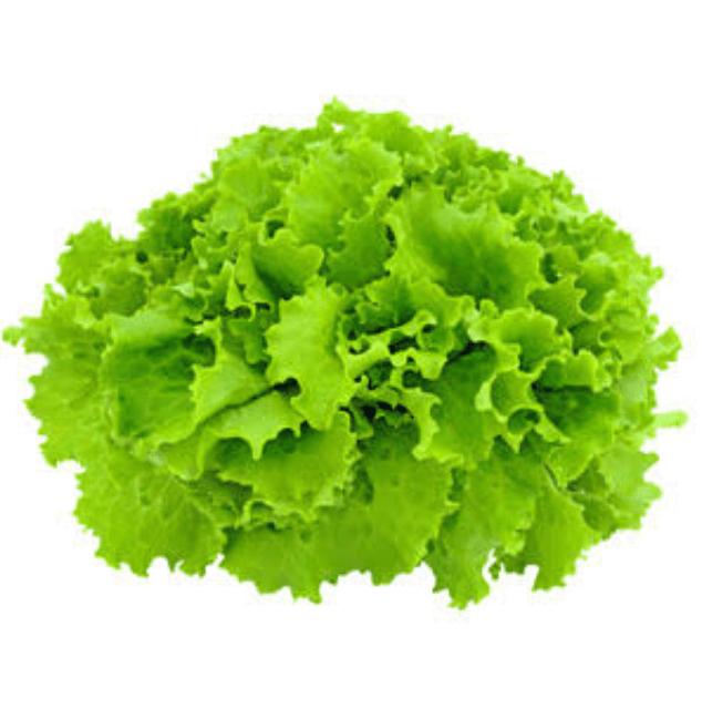 TGB coral green hydroponics