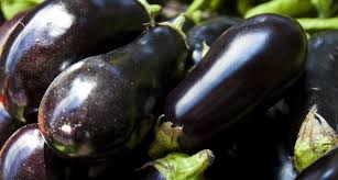TGB eggplant