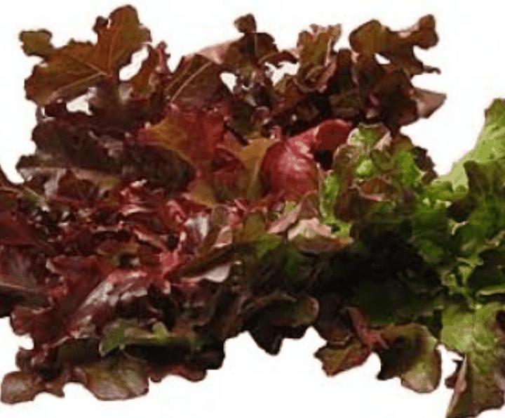 TGB oak red hydroponics