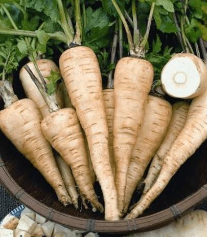 TGB parsnip