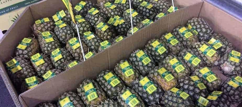 TGB pineapples