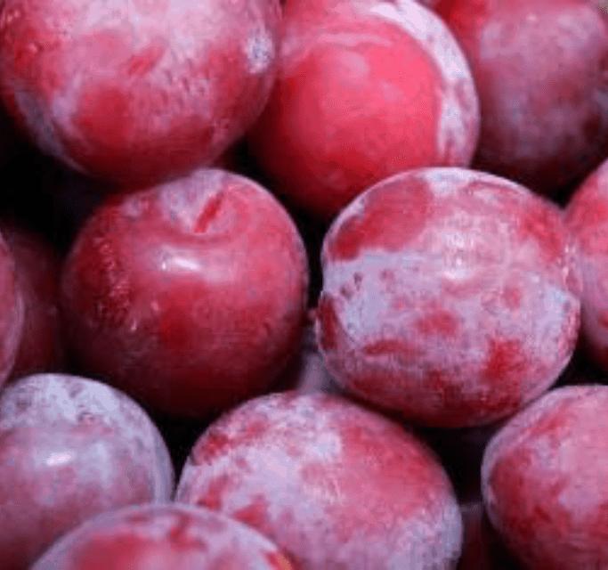 TGB plums