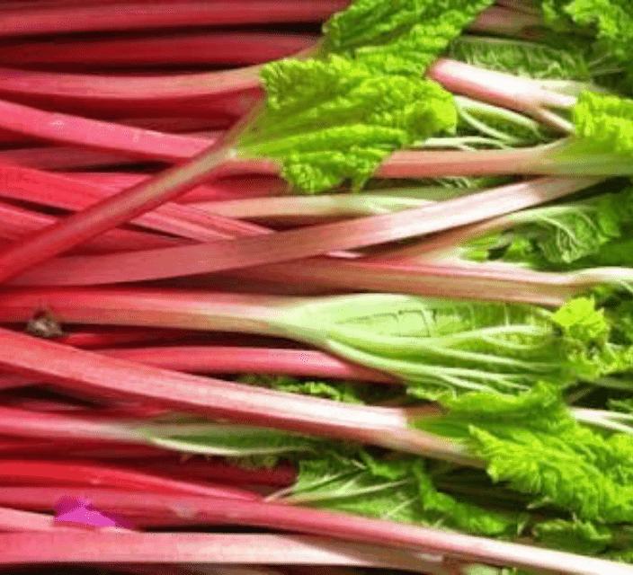 TGB rhubarb