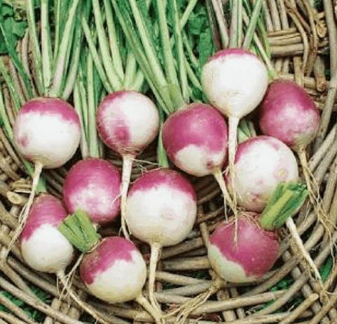 TGB turnips