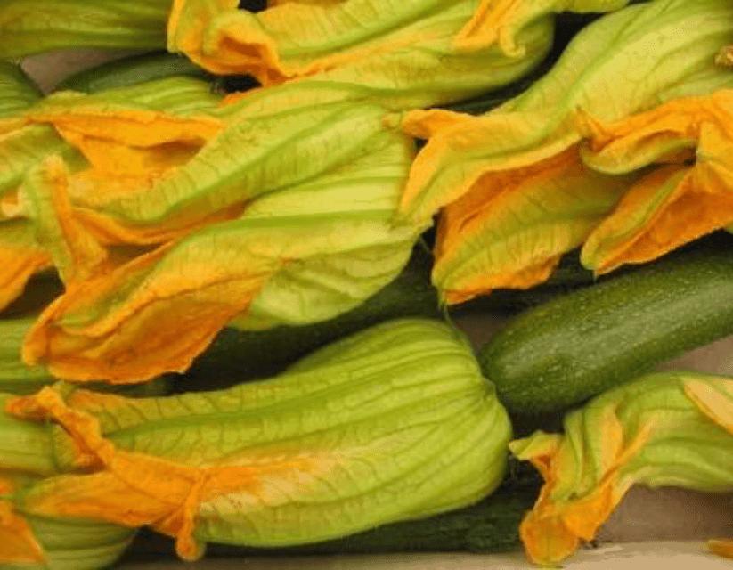 TGB zucchini flowers